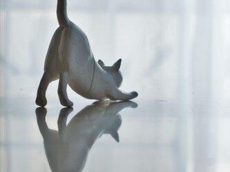 伸び猫・Bの画像