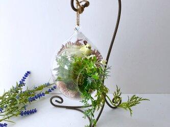 多肉植物 ガラステラリウム+スタンドの画像