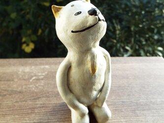白い犬の【ハクさん】の画像