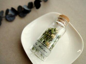 植物標本 Botanical Collection■No.R-7-B バラ ホワイトウッズの画像