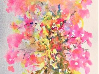 千年樹(桜花爛漫)の画像