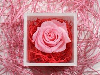 プリザーブドフラワーミニキューブ ピンクの画像