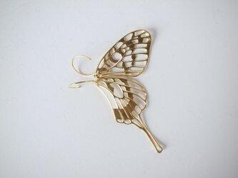 swallowtail / GPの画像