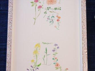 花の命名画の画像