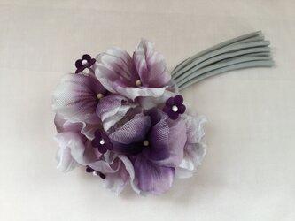 再販パンジーの花の画像