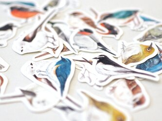 野鳥たちのフレークシールの画像
