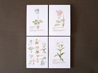 高山植物のポストカード4種セットの画像