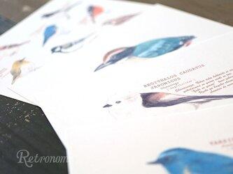 野鳥たちのポストカード4種セットの画像
