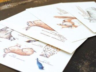 森のどうぶつたちのポストカード4種セットの画像