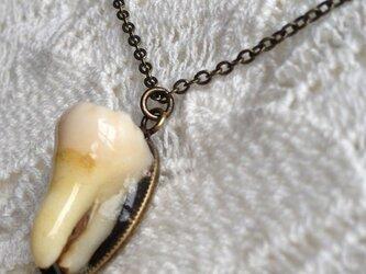 人間の歯のペンダントの画像