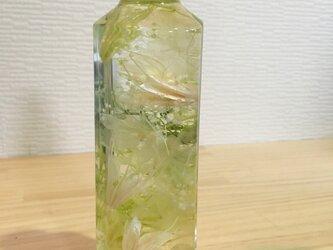 ☆*。ハーバリウム 植物標本 インテリア☆*。の画像