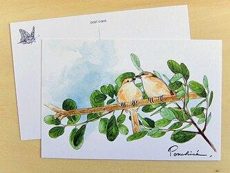 ポストカード 鳥の画像