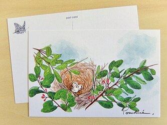 ポストカード 鳥の巣の画像