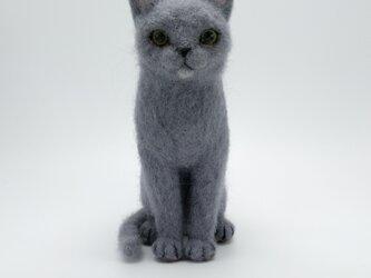 猫 (グレー)の画像