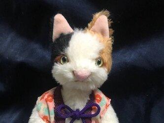 三毛猫さんの画像
