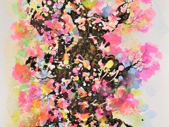 千年桜の画像
