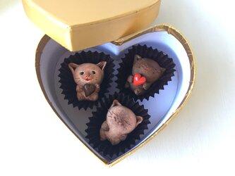 チョコレートみたいな猫さんトリオの画像
