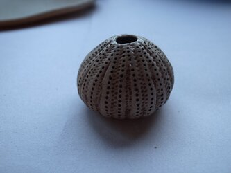 nature work ウニ殻の画像