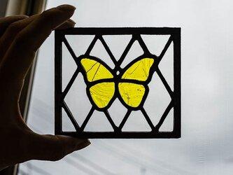 蝶(3mmケイムサンプル)の画像