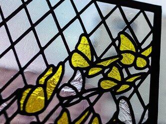 蝶の群れの画像