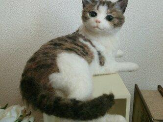 白キジ猫羊毛フエルトの画像