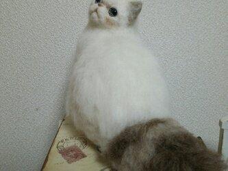 ペルシャ猫羊毛フエルトの画像