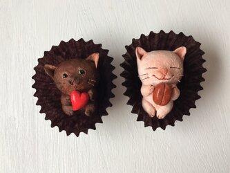 チョコレートみたいな猫さんコンビの画像