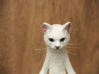 The Cat 【しろねこ】の画像