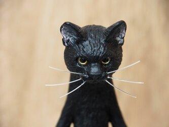 The Cat 【クロネコ】の画像