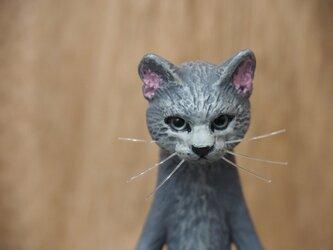 The Cat 【ロシアンブルー】の画像