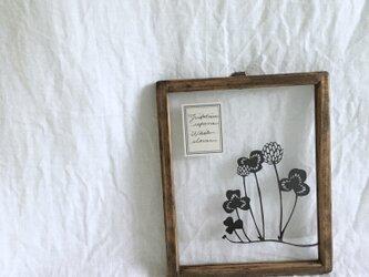 【植物標本シリーズ】シロツメクサの切り絵フレームの画像