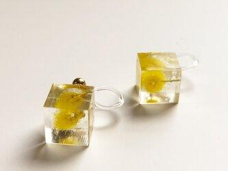 ミモザのイヤリング(樹脂製ノンホールピアス)の画像