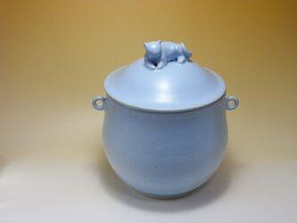 アイスブルー・クッキージャー・太ったネコ-1の画像