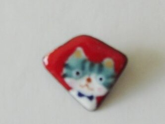 七宝 縞猫見てる見てるの画像