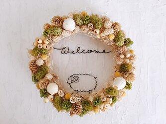 のんびり羊のカーリーモスリースの画像