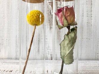 リニューアル!星月猫★1~10ギャラリー「20種類から選べる植物標本」ドライフラワー クラスペディア、バラ、オレガノケントの画像