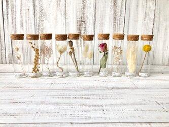 星月猫★10本セット「20種類から選べる植物標本」ドライフラワー シンプルに植物の美しさを楽しむ ミモザ、ラムズイヤーなど。の画像