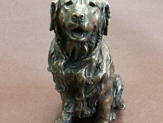 犬(ゴールデンレトリーバー)の画像