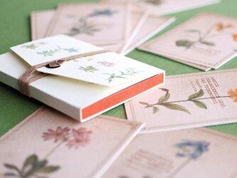 ちょっと大きめ*植物のメッセージカード(専用ケース付き)の画像