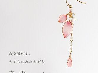 【春季限定】さくらのみみかざり 春光【片耳販売】の画像