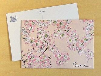 ポストカード 桜の画像