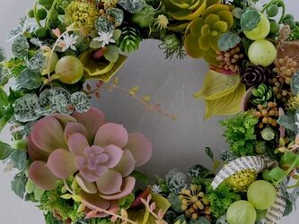 Echeveria , Anthurium & Muscat : wreathの画像
