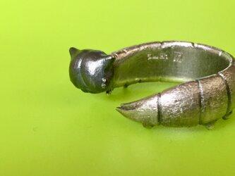 ねこ顔イモムシリング(ヒメジャノメチョウの幼虫)の画像