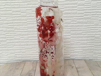 ☆*。ハーバリウム 植物標本 インテリア☆*。 紅白の画像
