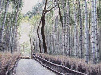 竹林を通って(京都:嵯峨野)の画像