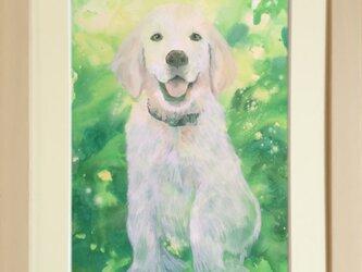 きれいなペットの肖像画【A4サイズ/1匹】の画像