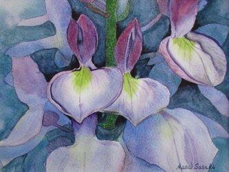 蘭の花の画像