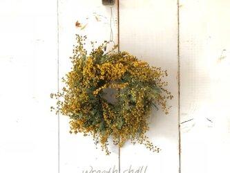 ラフに束ねた ミモザ ドライリース の画像
