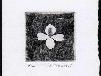 白い花・2018A/ 銅版画 (作品のみ)の画像