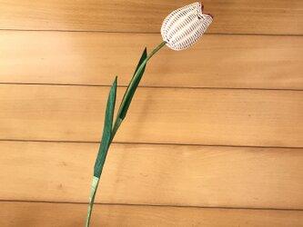 ラタン(籐)の花 ~フチがピンクのチューリップ~の画像